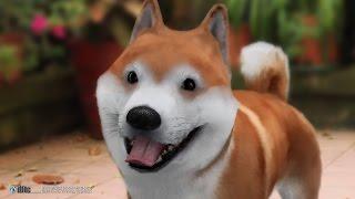 Shiba Facial Animation, Cartoon Style,3D動畫柴犬,卡通表情模擬.