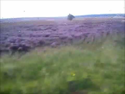 Wrzosowiska Anglii - North York Moors National Park -