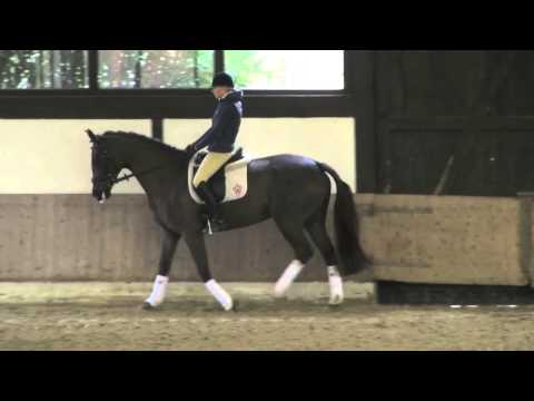 GHC Challenge 2013: How to ride the preliminary dressage test