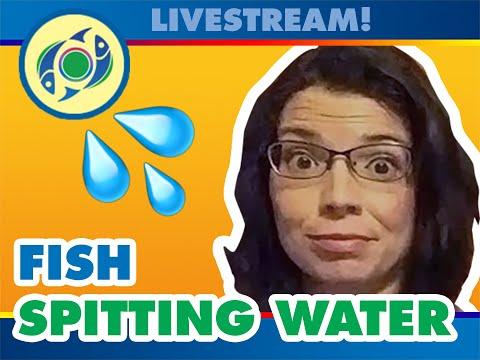 Fish Spitting Water