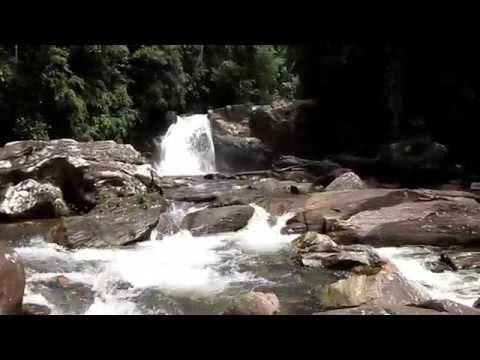 Im Sinharaja - Regenwald , Sri Lanka 29.09.14