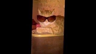 Я самый крутой кот.В крутых очках.