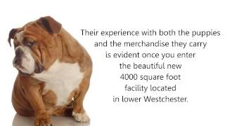 Puppies For Sale In Westchester Ny - Ny Breeder - Private Dog Grooming & Training