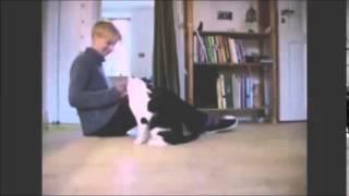 Приект по биологии   фильм про котят