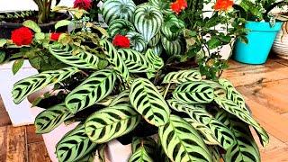 8 Plantas De Folhagens Ornamentais