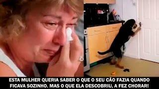 Ela queria saber o que o seu cão fazia quando ficava sozinho. Mas o que ela descobriu, a fez chorar