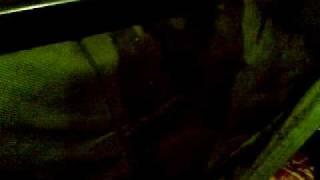 nikolas acordeon