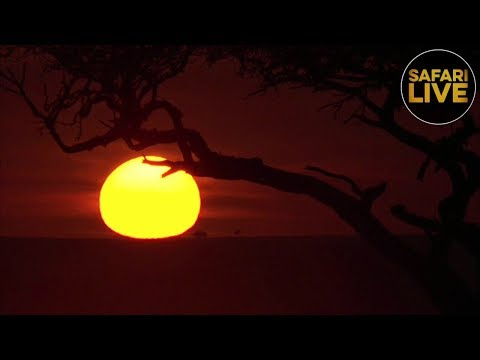 safariLIVE - Sunrise Safari - December 17, 2018