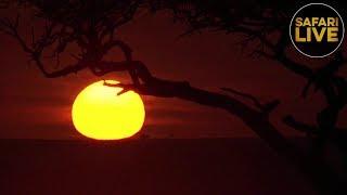 safariLIVE - Sunrise Safari - December 17, 2018