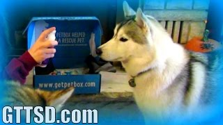 Puppy Vs Spray Bottle | Petbox Unboxing 24