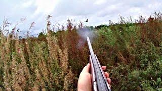 Охота на дупеля и утку с дратхааром 25 августа 2016 года