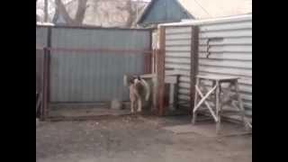 СМЕШНЫЕ и ПРИКОЛЬНЫЕ КОТЫ и СОБАКИ 2013 год cats dogs №1