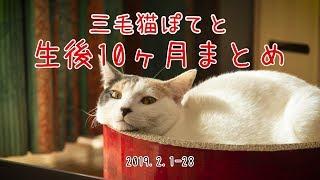三毛猫ぽてと・生後10ヶ月まとめ動画【高画質】