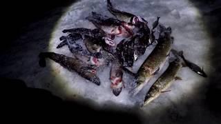 Как не нужно ловить рыбу  Жерлицы стоят, будет продолжение