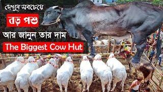 Largest Cow Haat | ঢাকার সবচেয়ে বড় পশুর হাট | দেখুন সবচেয়ে বড় পশু আর জানুন সেগুলোর দাম | Somoy TV