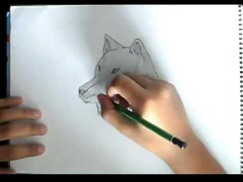 Como Dibujar Un Lobo Paso A Paso Youtube