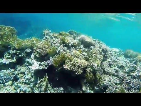 aqaba, jordan - gopro hero 4 silver snorkeling - 1080p