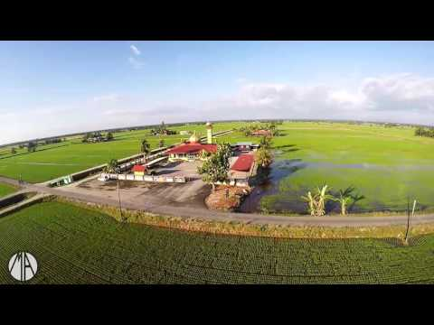 Drone Footage Sawah Padi Tanjung Karang Selangor