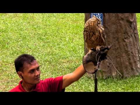 Jurong Bird Park's Kings of the Skies show