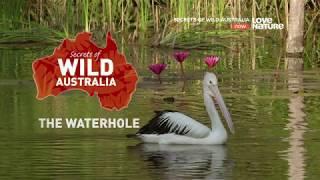 Тайны дикой природы Австралии : Водоемы 4K