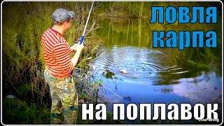 Ловля карпа на поплавочную удочку.  Рыбалка.