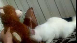 Коту и мишке нравиться.