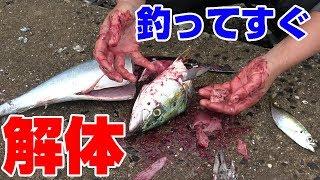 【鮮度最強‼】釣れた魚をその場で食べてみた‼