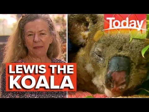 The Woman Who Saved Lewis The Koala   Today Show Australia