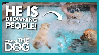 Is This PoolDiving Dog a Danger to Others or Himself? |  It's Me or The Dog