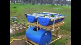 Homemade Aquaponics Fish Tank | Aquaponics Fish Tank To Grow Bed Ratio
