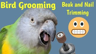 Senegal Parrot Grooming and Examination at The Bird Clinic | Beak and Nail Trimming