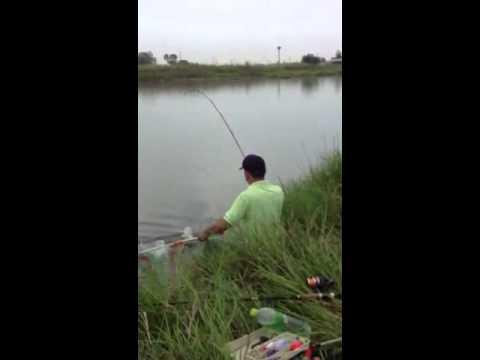 ตกปลาด้วยใส้ปลาทู