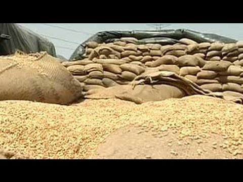 Punjab's problem of plenty: Bumper wheat crop but no storage space