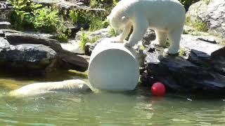 Hertha spielt mit Mama im Wasser