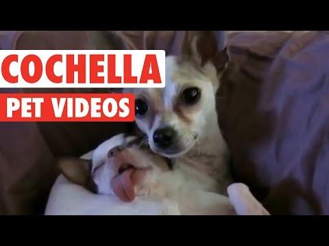 Funny Coachella Pet Compilation
