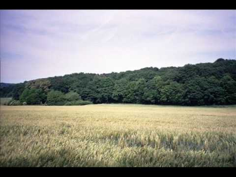 The Battle of Belleau Wood