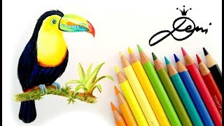 🐥Tukan Vogel realistisch zeichnen lernen 🐦How to Draw a Realistic Toucan 😍 как се рисува тукан