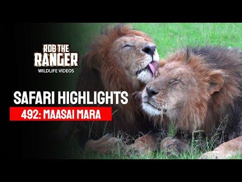 Safari Highlights 492: 1st & 2nd April 2018 (Latest Sightings) (4K Video)