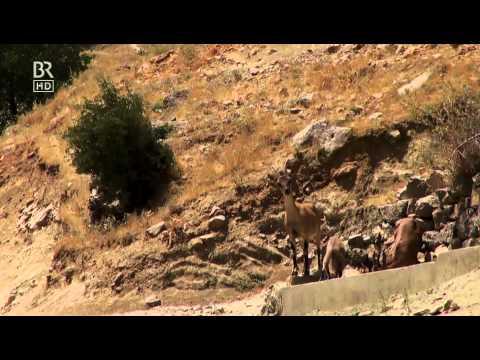 Welt der Tiere Ins wilde Kurdistan | BR 19.10.2014