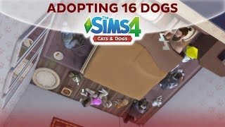ADOPTING 16 DOGGOS / The Sims 4 Cats & Dogs thumbnail