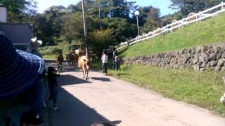 昨日の祝日は、群馬の神津牧場へ日帰りドライブしてきました。 名物ジャ...