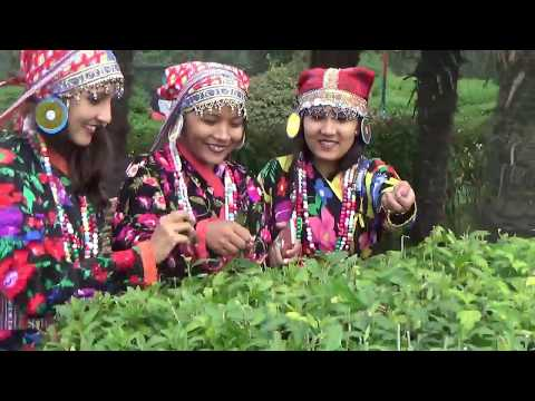 WOW Peace Darjeeling | Tourism Area | No More Strike | VLOG | Nijgadh TV