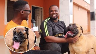 DeAsantez Dog Kennel Visit. Award winning dog breeder shares his 8 years story as a dog breeder