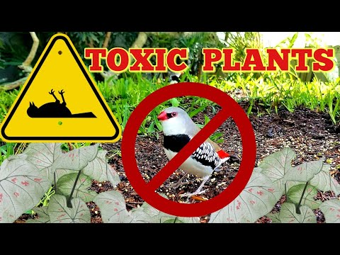 Cleaning The Aviary + List Of TOXIC Plants For Birds