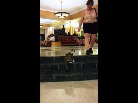Cuba cat2