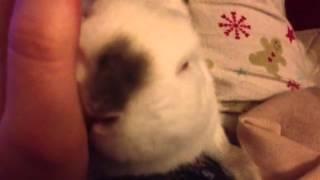 Rabbit Licking Me