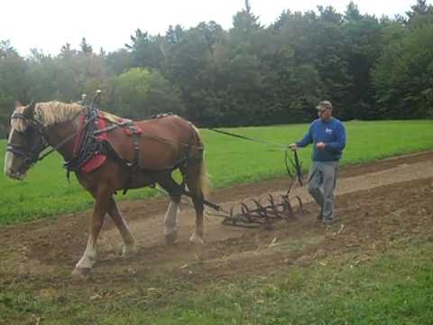 Weed Row Royalty Free Stock Photos - Image: 33428508   People Pulling Harrows