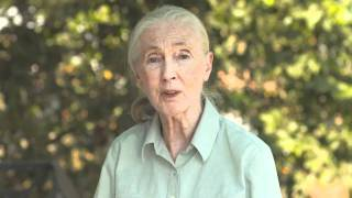 Jane Goodall Supports Rangers and The Thin Green Line Foundation