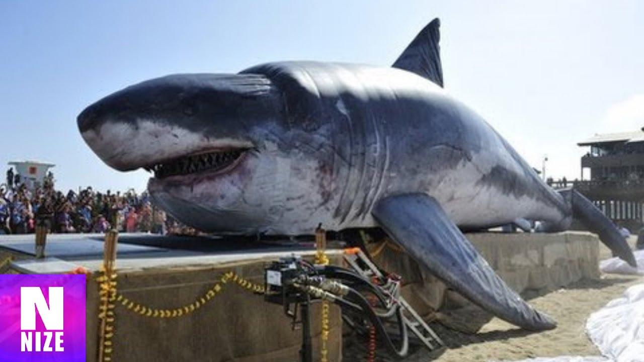 Größter Weißer Hai Submarine