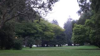 Some Fpv In Golden Gate Park